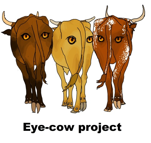 Eye cow